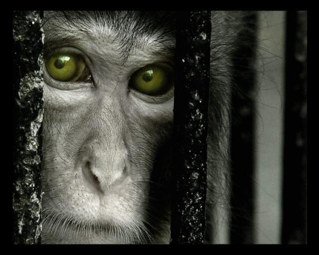 ojos-de-mono-triste